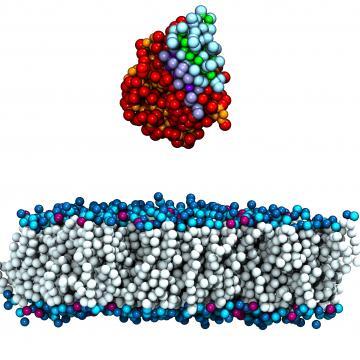 ARC case study: lipase enzymes.